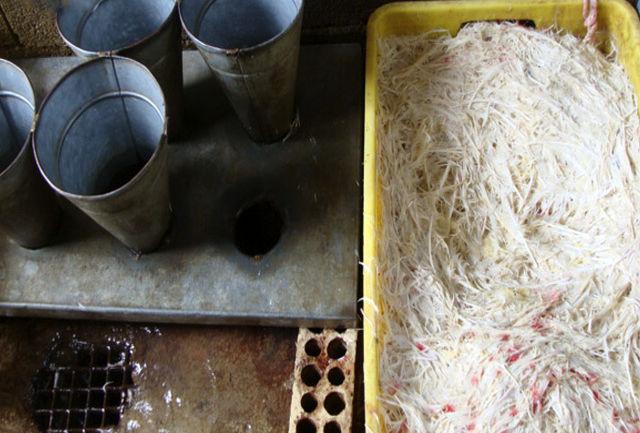 مدیرکل دامپزشکی خواستار برچیده شدن کشتار مرغ زنده در استان شد