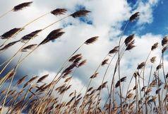 وزش باد و خیزش گرد و خاک در کشور ادامه دارد