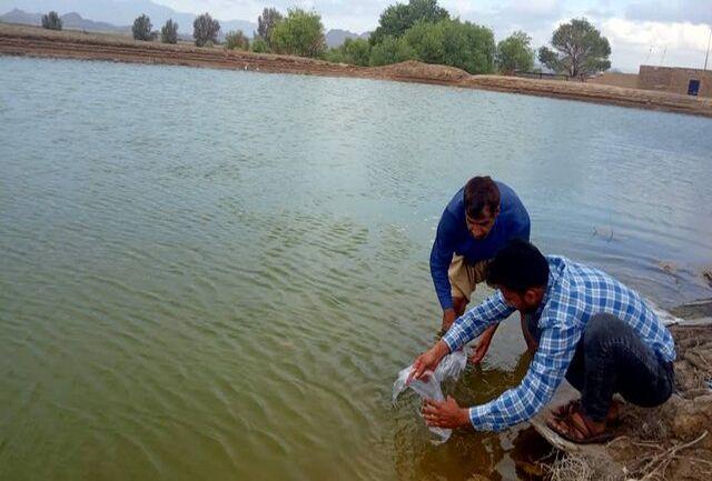 ۴ میلیون و ٧٠٠ هزار قطعه لارو ماهی در منابع آبی سیب و سوران رها شد
