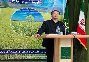 پیش بینی کشت ۳۲ هزار هکتار دانه روغنی کلزا در آذربایجان غربی