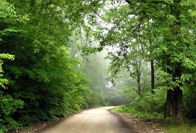 پیدا شدن 3 گمشده در جنگل های تنکابن