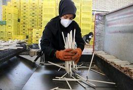 احداث کارخانه های صادرات محور یکی از راه های افزایش میزان صادرات است