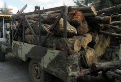 کشف 3 تن چوب جنگلی قاچاق در املش