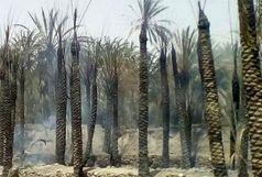650 نفر نخل در روستای کلو میناب در آتش سوخت