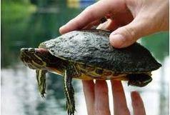 هیچ سنتی در مورد خرید و نگهداری لاکپشت، سمندر و مار در نوروز نداریم