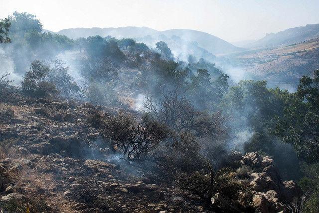 دستگیری عامل آتشسوزی جنگل مریوان