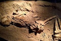 کشف اسکلت مرد ۵۰ هزار ساله در کرج