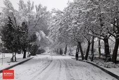 کدام استانها درگیر برف و باران هستند؟