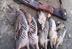2 متخلف به جرم شکار غیر مجاز کبک در شهرستان سلطانیه دستگیر شدند