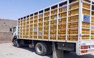 محموله های مرغ قاچاق به پایتخت نرسید