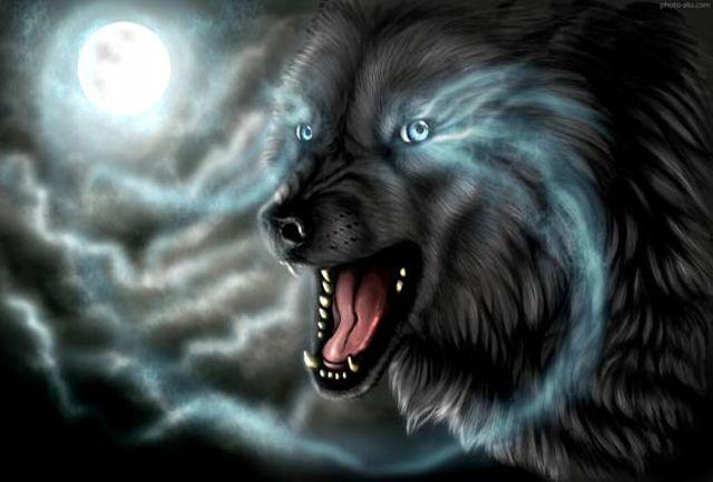 گرگها 20 راس دام را در زنجان دریدند