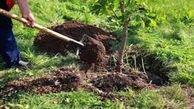 کاشت ۲۵۰۰ اصله نهال طی هفته منابع طبیعی در سطح شهرستان بستک