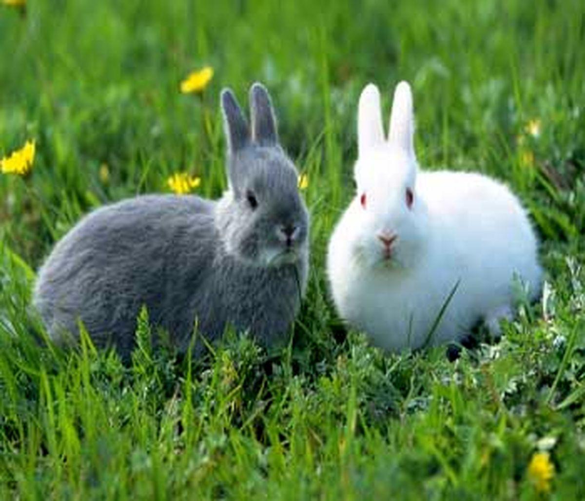حقایقی باورنکردنی درباره خرگوش ها! + عکس