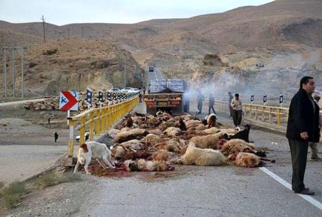 تلف شدن 41 راس گوسفند در برخورد وحشتناک کامیون با گله