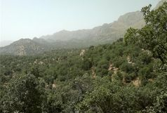 نجات 6 هزار و 500 درخت بلوط