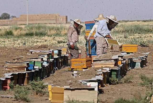 جایگاه نخست اصفهان از لحاظ سرانه تعداد کلنی زنبور عسل در کشور
