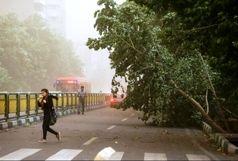 وزش باد شدید در تهران طی فردا