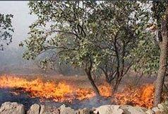 پلنگ دره در آتش سوخت