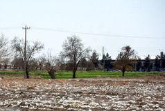 کشت زیرنایلونی در بوئین زهرا به زودی ممنوع می شود