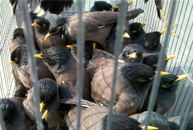 کشف محموله ۱۸۰ قطعه ای پرنده در سیستان و بلوچستان