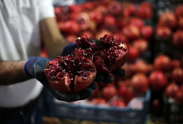 نخستین جشنواره انار در مهریز برگزار میشود