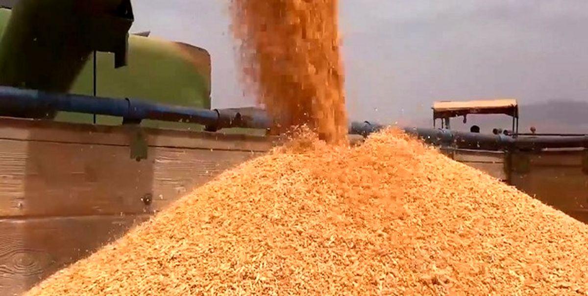 خرید بیش از ۲۴ هزار تن گندم از کشاورزان سیستان و بلوچستانی
