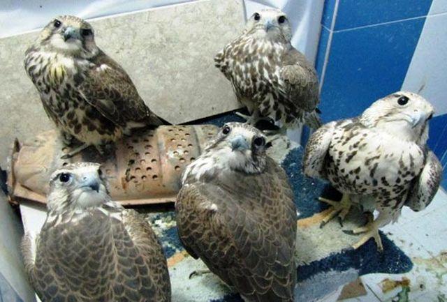 کشف 136 پرنده قاچاق کم یاب در کرمان