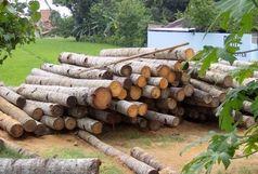 کشف بیش از 36 تن چوب قاچاق در ماسال