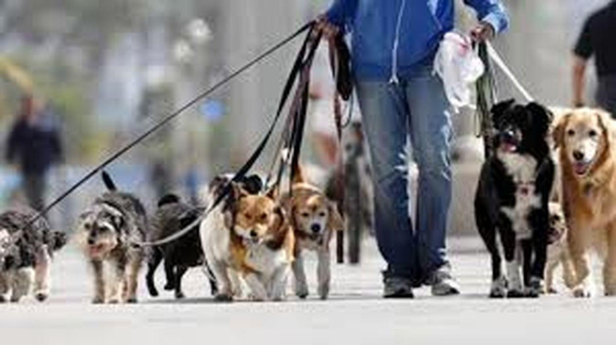 برخورد با سگ گردانی مطالبه مردم است