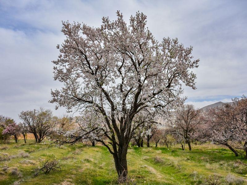 طبیعت بهاری استان مرکزی