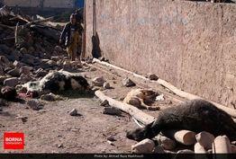 افراد غیرمتخصص در مناطق زلزلهزده حضور نیابند/ احساس ناامنی در بین زلزلهزدگان وجود دارد