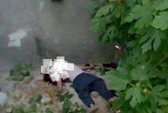 سقوط مرگبار پیرمرد 73 ساله از درخت
