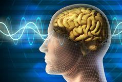 کشفی جدید و جالب درباره مغز انسان!