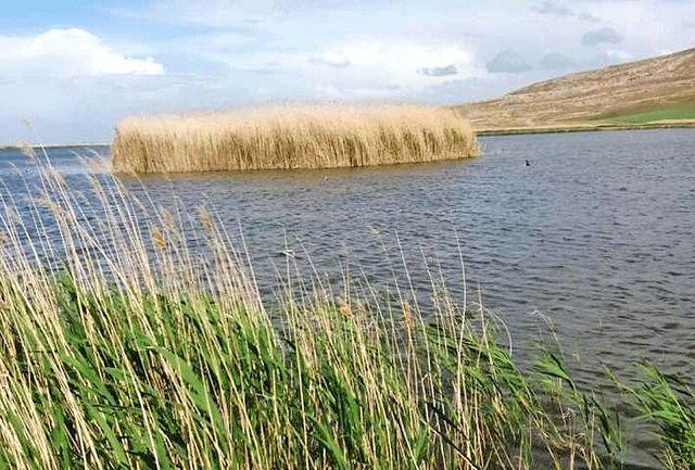 مدیریت زیست بومی تالاب آق گل ملایر تدوین می شود