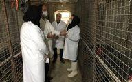 آغاز کار اصلاح نژادمرغ بومی خزک در زاهدان