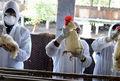 موردی از ابتلا افراد به آنفلوآنزای پرندگان گزارش نشده است/ شاهد طغیان بیماریهای مشترک بین انسان و دام نیستم