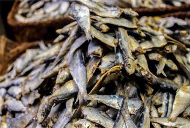 کشف 4 تن ماهی خشک قاچاق در بستک