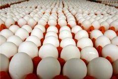 تخم مرغ ۱۳۸۰۰ تومانی از امروز به بازار تهران می آید