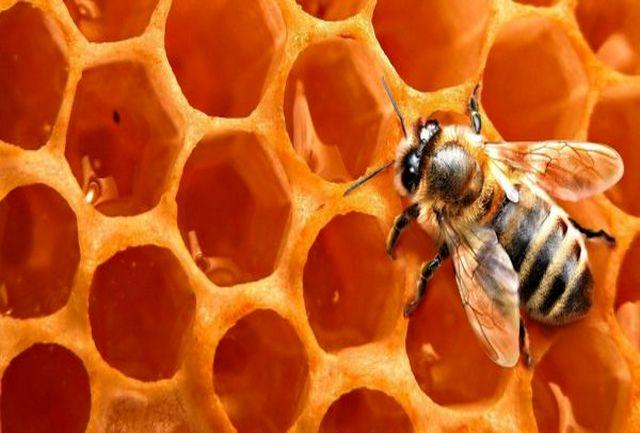 تولید بیش از ۳۴۰۰۰ کیلو عسل کنار در شهرستان بستک