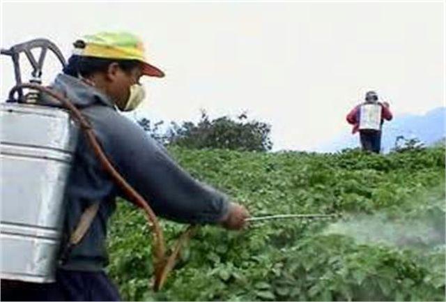 مبارزه با ملخ شکم بادمجانی در مزارع اورامانات ادامه دارد