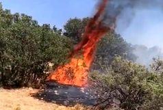 ۲۵ هکتار از جنگل های دنا در آتش سوخت
